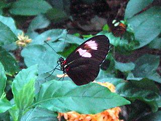 (c) Lindsay Obermeyer butterfly 6