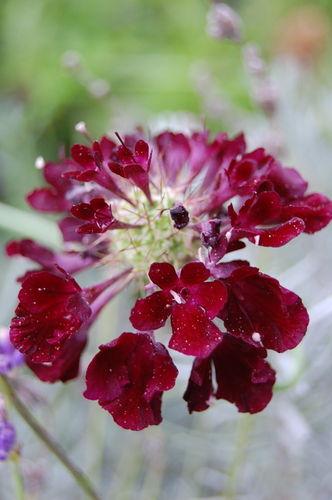 (c) Lindsay Obermeyer flower