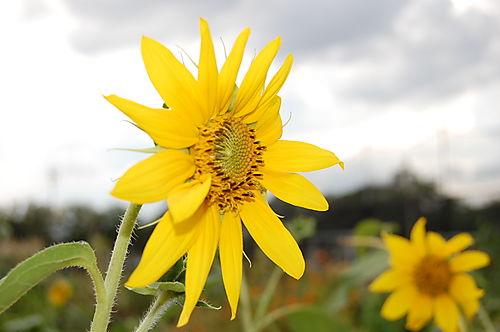 (c) Lindsay Obermeyer flowers