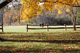 ©2009 Lindsay Obermeyer Ragdale leading to prairie