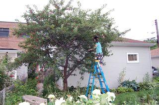 ©2010 Lindsay Obermeyer Cherry Picking