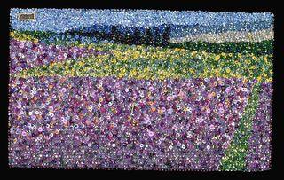 Purple Field