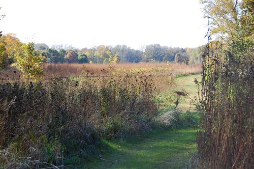 ©2009 Lindsay Obermeyer Skokie River Nature Preserve