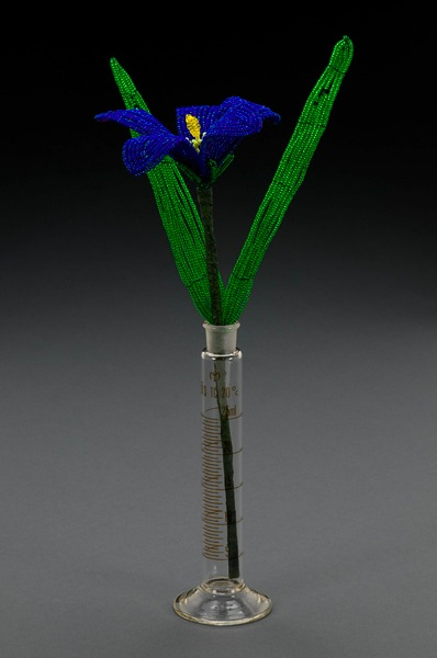 ©2013 Lindsay Obermeyer Blue eyed grass flower