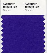 Blue_iris